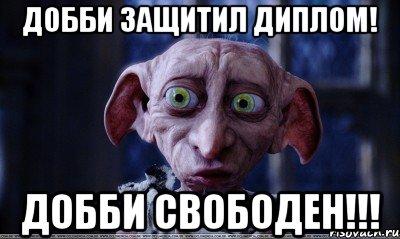dobbi_22340601_orig_.jpeg