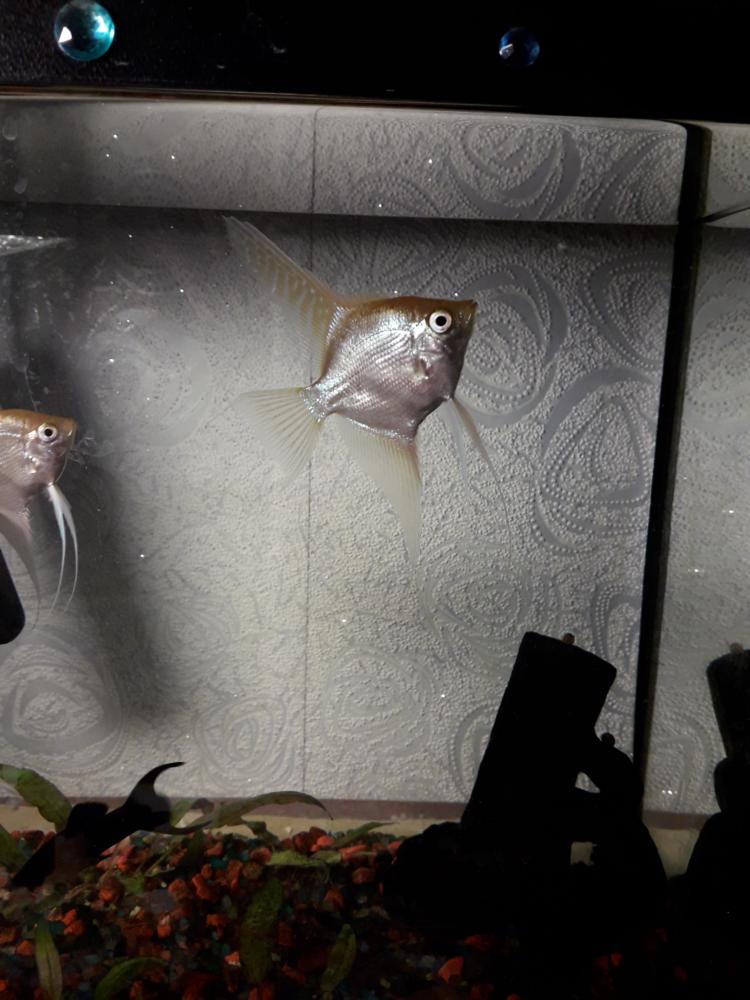 fish-3.png