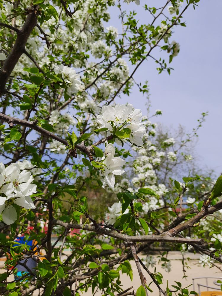 Bloom-3.png