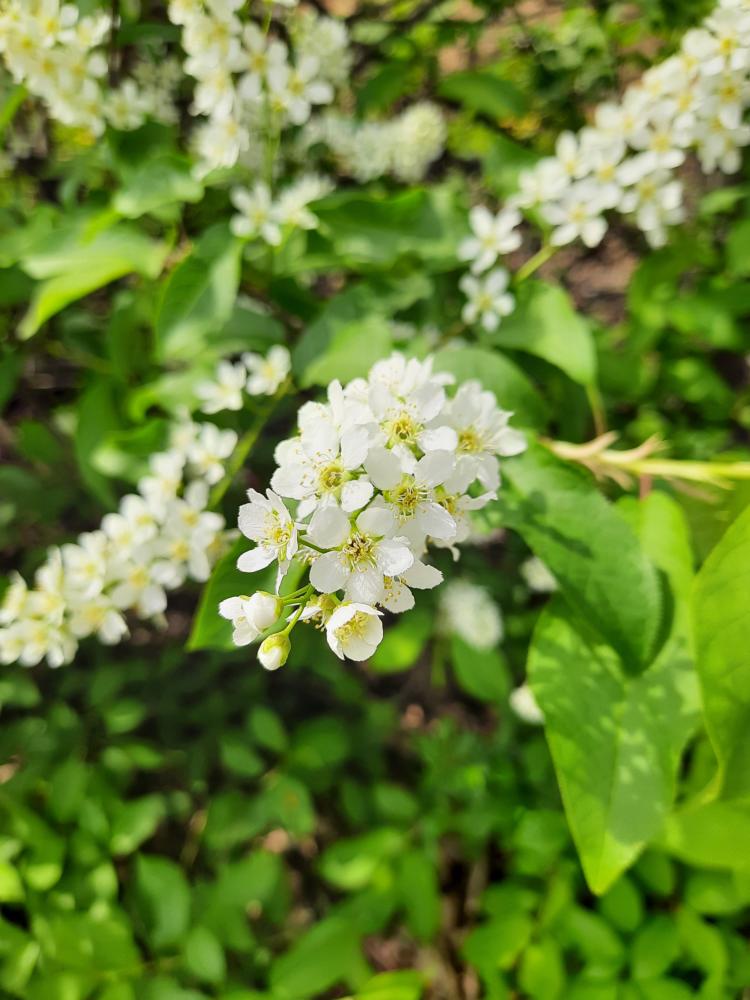 Bloom-6.png