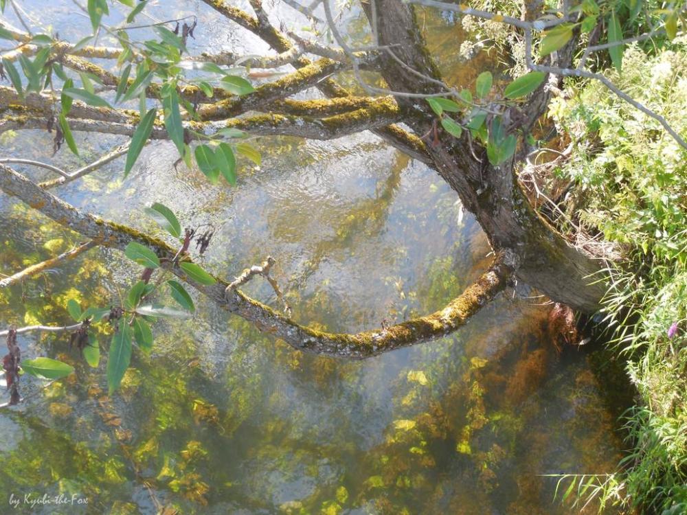 river_by_kyubi_the_fox_ddgph2m-pre.thumb
